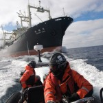 Sea Shepherd activists confronting the Japanese whaling fleet, Winter 2009