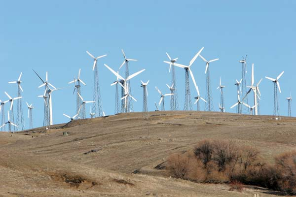 Could wind turbines like these be harmful to your health? The scientific consensus is far from clear.