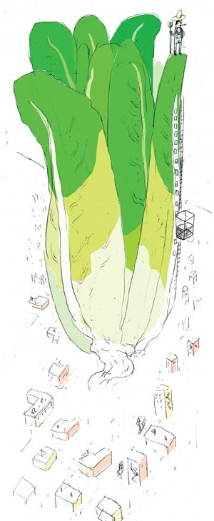 How to get local produce in the city? Look up. Illustration by Peter Mitchell.