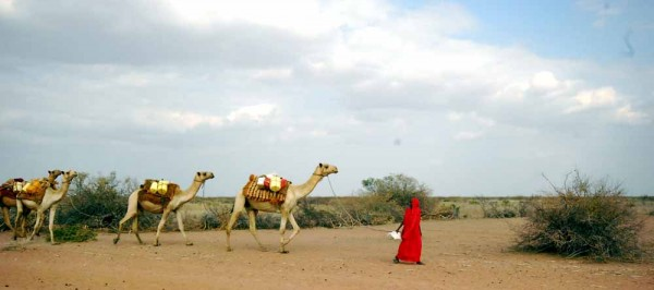 A nomadic Somali woman leads her camels in the drought-afflicted north of Kenya. Photo by Siena Anstis.