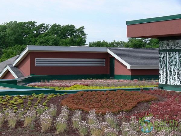 The green roof insulates the building, keeping it cooler in summer and warmer in winter.