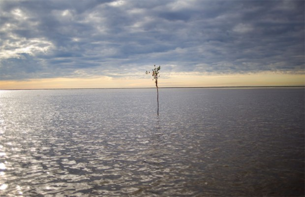 A willow branch marks the passage from Lake Athabasca into the Athabasca Delta.