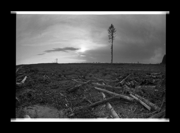 Remnants of a clear cut logging operation near Grassy Narrows, Ontario. Photo by Jon Schledewitz.